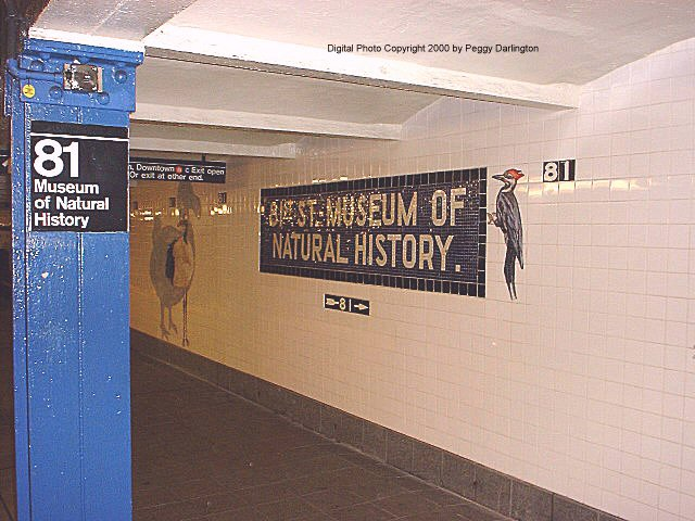 (76k, 640x480)<br><b>Country:</b> United States<br><b>City:</b> New York<br><b>System:</b> New York City Transit<br><b>Line:</b> IND 8th Avenue Line<br><b>Location:</b> 81st Street/Museum of Natural History<br><b>Photo by:</b> Peggy Darlington<br><b>Date:</b> 2000<br><b>Artwork:</b> <i>For Want of a Nail</i>, MTA Arts For Transit Collaborative, 1999<br><b>Viewed (this week/total):</b> 0 / 10245