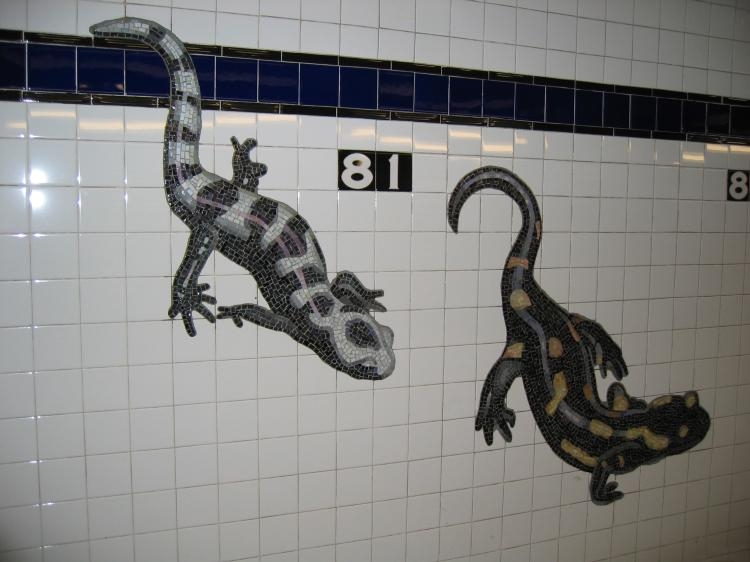 (55k, 750x562)<br><b>Country:</b> United States<br><b>City:</b> New York<br><b>System:</b> New York City Transit<br><b>Line:</b> IND 8th Avenue Line<br><b>Location:</b> 81st Street/Museum of Natural History<br><b>Photo by:</b> Robbie Rosenfeld<br><b>Date:</b> 2/14/2005<br><b>Artwork:</b> <i>For Want of a Nail</i>, MTA Arts For Transit Collaborative, 1999<br><b>Notes:</b> Lizard panel.<br><b>Viewed (this week/total):</b> 0 / 10189